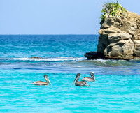 Pelicans just off Contadora Island